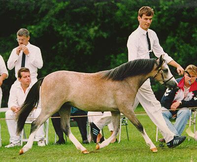 Sumrin Tatjana as a yearling
