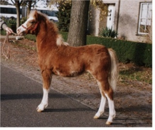 Toscane as a foal